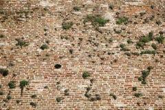 Alte Wand des roten Backsteins mit grünem Gras der Vegetation Lizenzfreies Stockbild