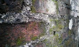 Alte Wand des roten Backsteins mit Pilz auf ihm stockfotografie