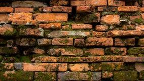 Alte Wand des roten Backsteins des thailändischen Tempels mit Grünpflanze oder Moos Lizenzfreie Stockfotos