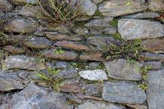Alte Wand hergestellt von den natürlichen Felsen mit Anlagen zwischen Blöcken Stockbilder