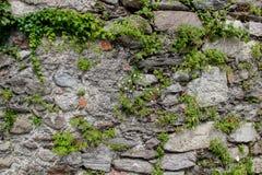 Alte Wand hergestellt von den natürlichen Felsen mit Anlagen zwischen Blöcken und Kamillenbündel in der Mitte Lizenzfreie Stockbilder