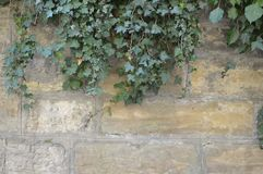 Alte Wand mit Efeu Lizenzfreie Stockbilder