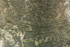 Alte Wand mit Moos Stockfotografie