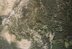 Alte Wand mit Moos Lizenzfreies Stockfoto