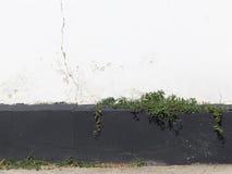 Alte Wand und Anlagen Lizenzfreie Stockfotos