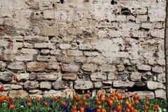 Alte Wand und Blumen Stockfotografie