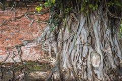 Alte Wand und Kopf von Buddha-Statue im Baum wurzelt bei Wat Mahathat Stockbild