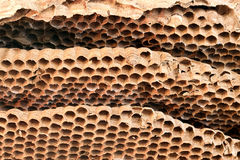 Alte Wespenbienenwabe der Nahaufnahme Stockbild