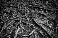 Alte Wurzeln Stockbild
