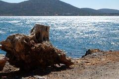 Alte Wurzeln auf einem Waldbaum nahe der Küstenlinie Stockbilder