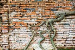 Alte, zackige Backsteinmauerbeschaffenheit Lizenzfreies Stockfoto