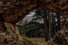 Alte Zedernwaldung im Libanon, wie in der Bibel gemerkt lizenzfreie stockfotografie