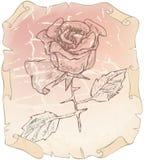 Alte Zeichnungsrosen auf Papier löschten Lizenzfreie Stockbilder