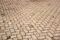 Alte Zementziegelstein-Bodenbeschaffenheit im Garten Stockbilder