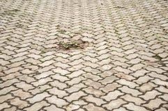Alte Zementziegelstein-Bodenbeschaffenheit im Garten Lizenzfreie Stockbilder