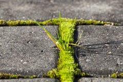 Alte Ziegelsteine und Gras Lizenzfreie Stockfotos