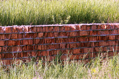 Alte Ziegelsteinwand und -gras des Schmutzes Stockfotografie