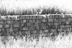 Alte Ziegelsteinwand und -gras des Schmutzes Rebecca 6 Der Kampf des Mannes und der Natur Lizenzfreies Stockfoto