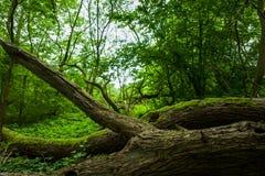 Altengroden公园在威廉港,德国 免版税库存照片