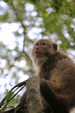Alter Affe auf dem Baum Lizenzfreie Stockbilder