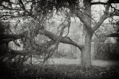 Alter Apfelbaum Stockbild