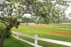 Alter Apfelbaum Stockfoto