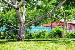 alter Apfelbaum im Garten nahe dem Haus Lizenzfreie Stockbilder
