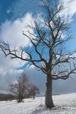 Alter Apfelbaum im Schnee Stockbild