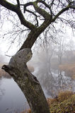 Alter Apfelbaum nahe Fluss und Herbstnebel Lizenzfreie Stockbilder