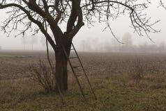 Alter Apfelbaum und Nebel Stockbild