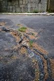 Alter Asphalt Stockbilder