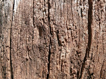 Alter-aufgeraute Holzoberfläche Lizenzfreies Stockfoto