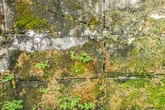 Alter Backsteinmauerhintergrund, alte Backsteinmauer überwältigen mit Moos und Anlage Lizenzfreie Stockfotos