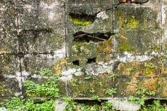 Alter Backsteinmauerhintergrund, alte Backsteinmauer überwältigen mit Moos und Anlage Stockfotos