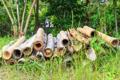 Alter Bambus und Stockbambus Stockbild
