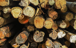 Alter Bauholzquerschnitthintergrund Lizenzfreie Stockfotografie