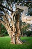 Alter Baum Stockfotos