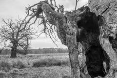 Alter Baum Lizenzfreie Stockbilder