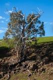 Alter Baum Stockfotografie