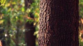 Alter Baum stock footage