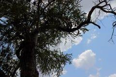 Alter Baum Lizenzfreies Stockbild