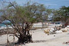 Alter Baum auf dem Strand Stockbild