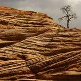 Alter Baum auf rotem Sandstein Stockfotografie