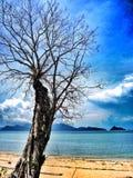 Alter Baum auf Strandinselhintergrund Stockfotos