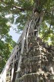 Alter Baum in den Ruinen Stockfotografie