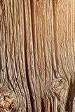 Alter Baum in den Sprüngen Lizenzfreie Stockfotos