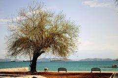 Alter Baum, der auf dem Strand steht Stockfotos