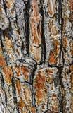Alter Baum der Barke Stockfotografie