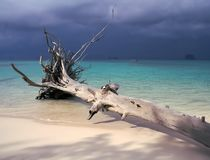 Alter Baum, der sich auf einem Strand in Thailand hinlegt stockfotografie