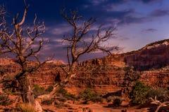 Alter Baum in der Utah-Wüste an der Dämmerung stockbild